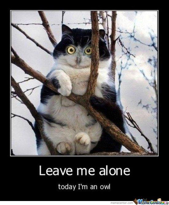 Cat-owl_o_104676