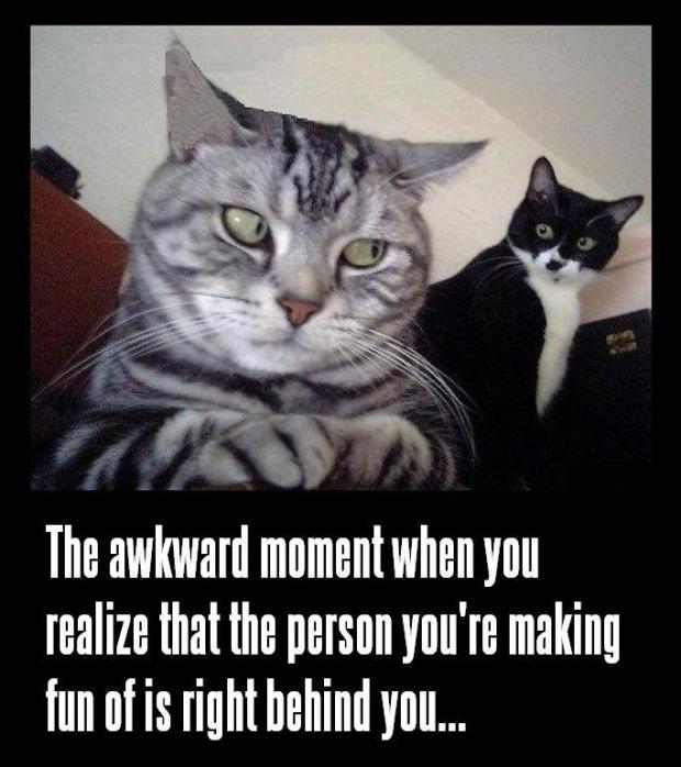funny-cat-meme