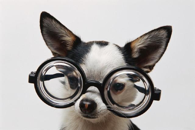 dog-w-glasses