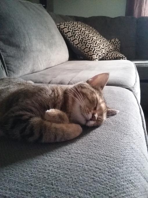 sleeping-maggie